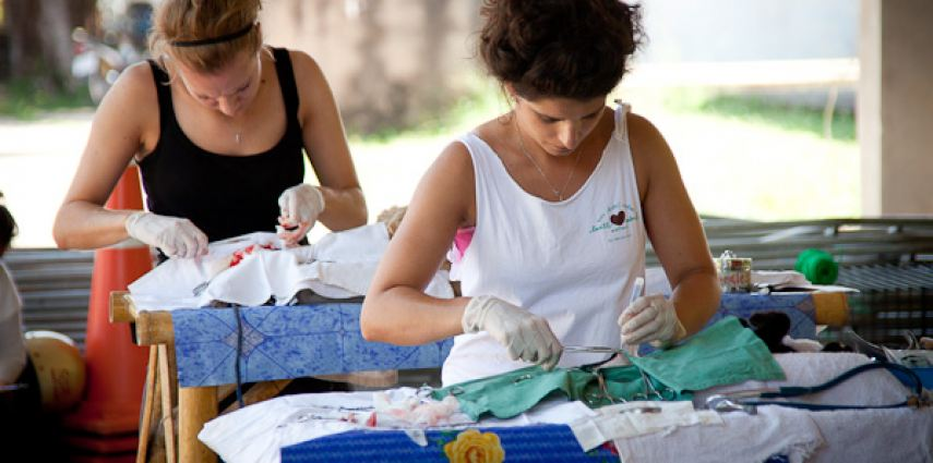 Two volunteer vets operate at one of Lanta Animal Welfare's mobile sterilisaion clinics.